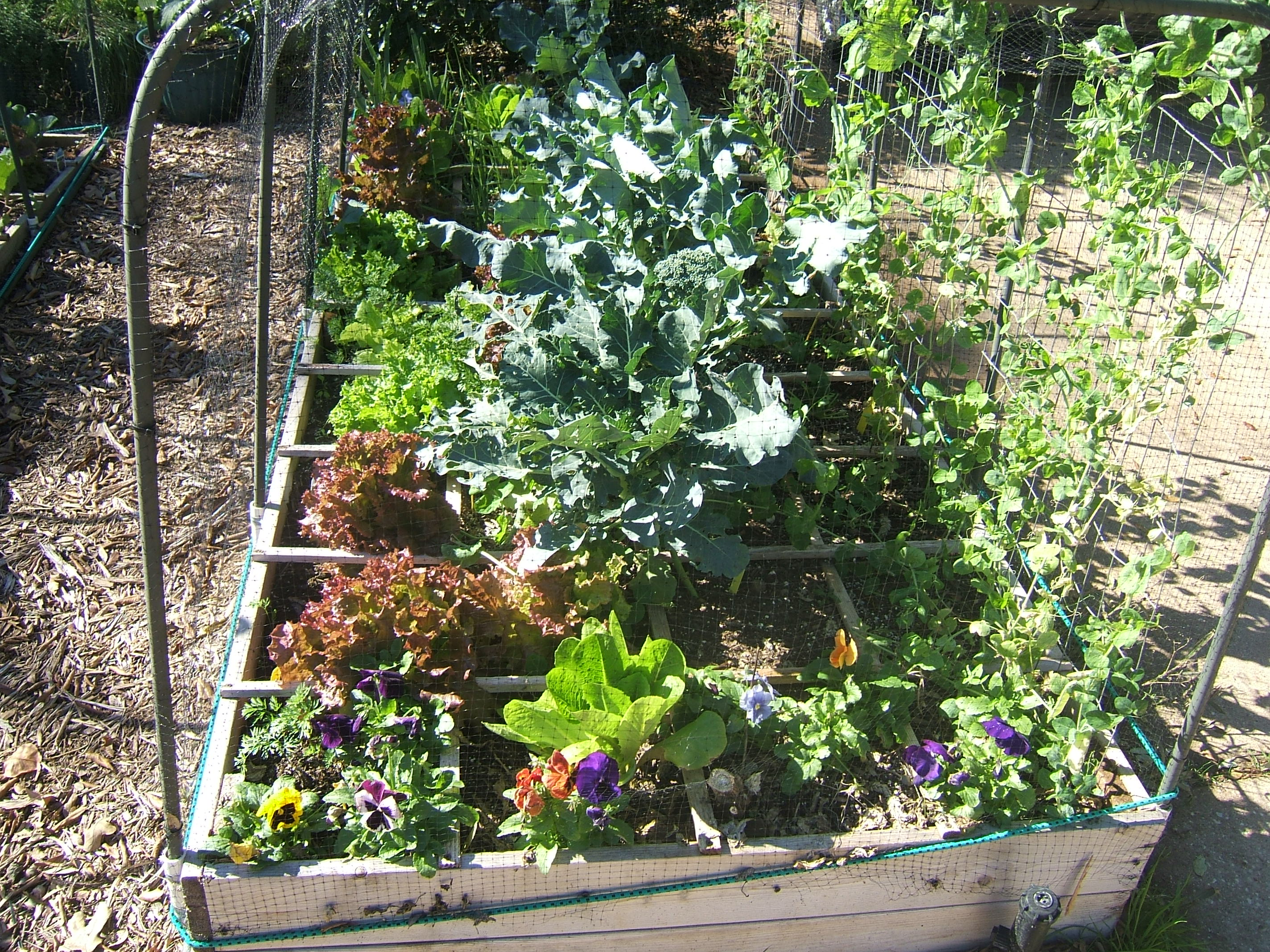 cubicfootgardening blog archive design rules for a square