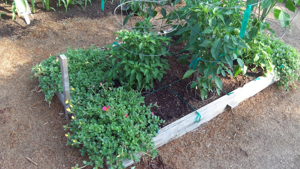 Small Square Foot Garden